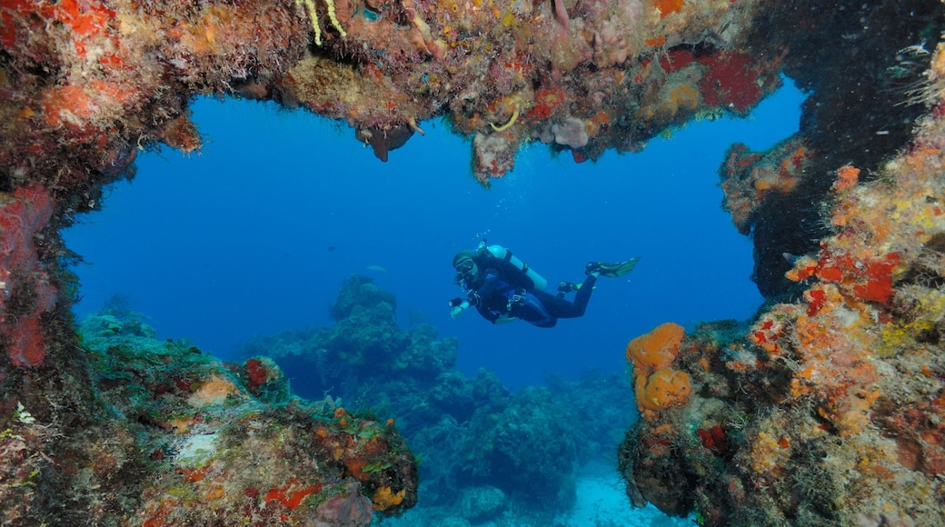 Playa del Carmen featuring scuba diving and colourful reefs
