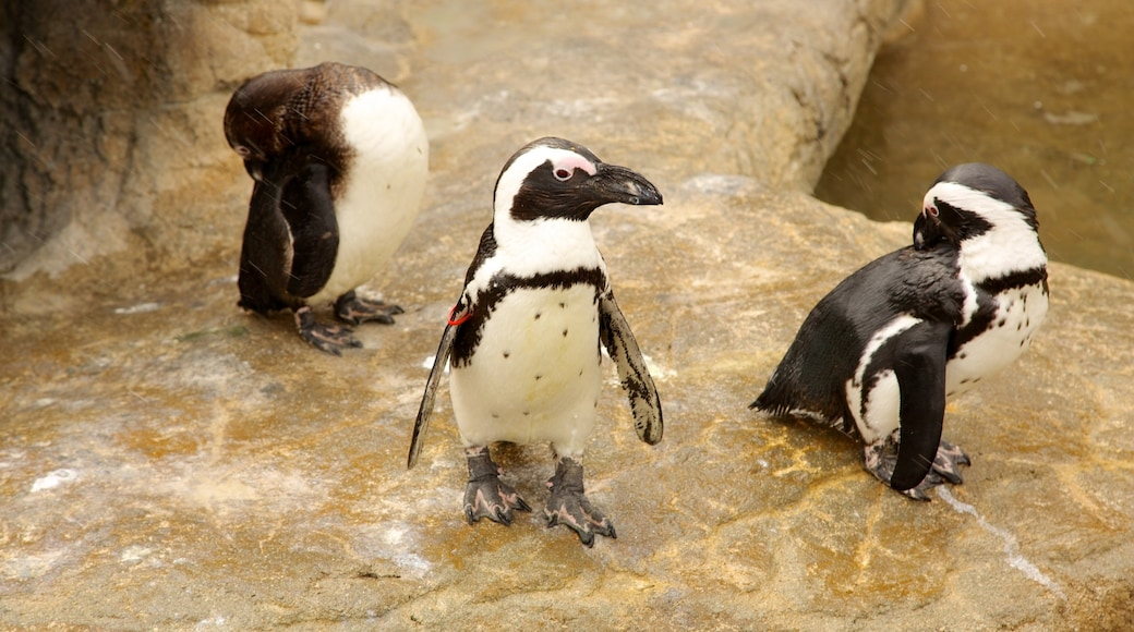 Denver Zoo showing bird life and zoo animals