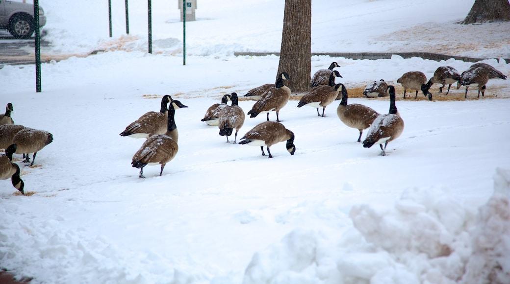 City Park featuring snow and bird life