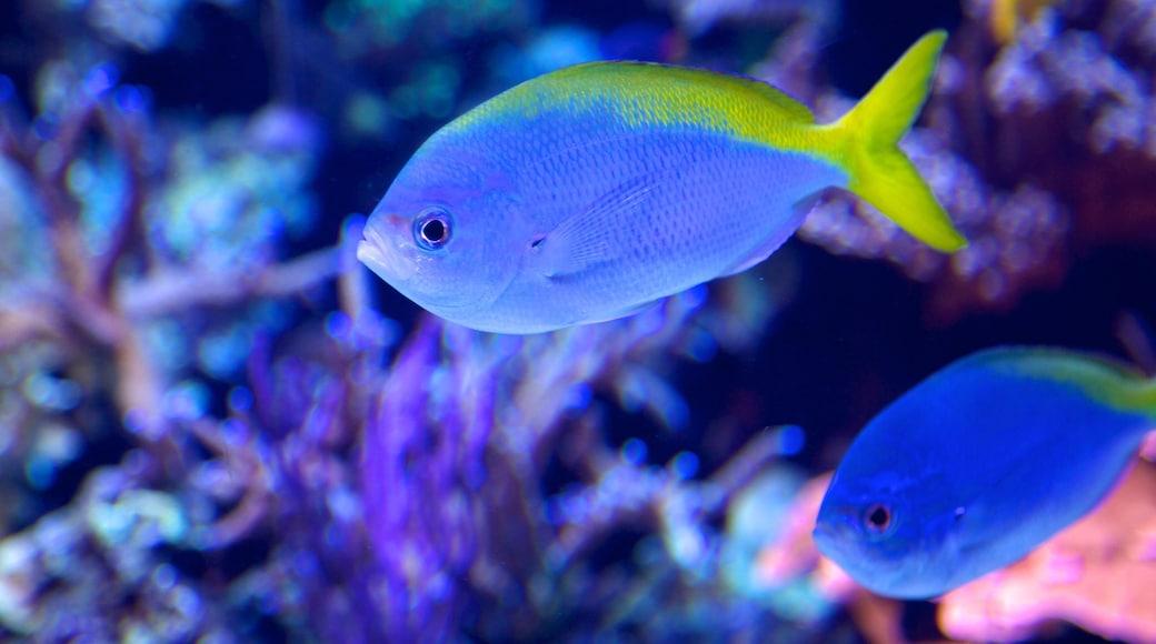 Downtown Aquarium caracterizando vistas internas e vida marinha