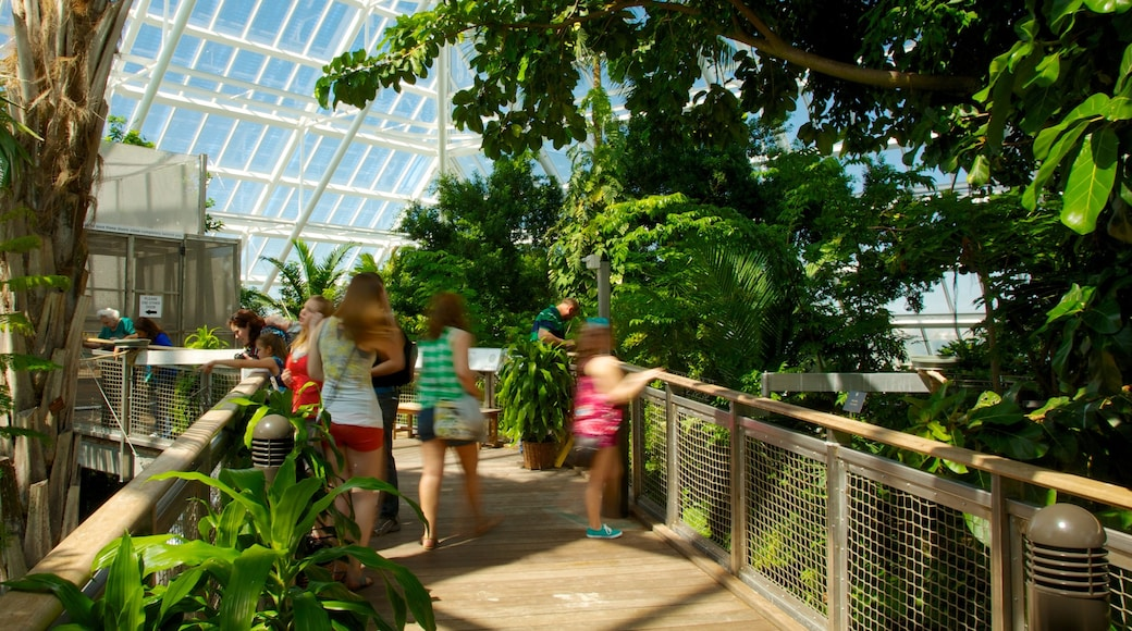 Moody Gardens which includes interior views and a garden