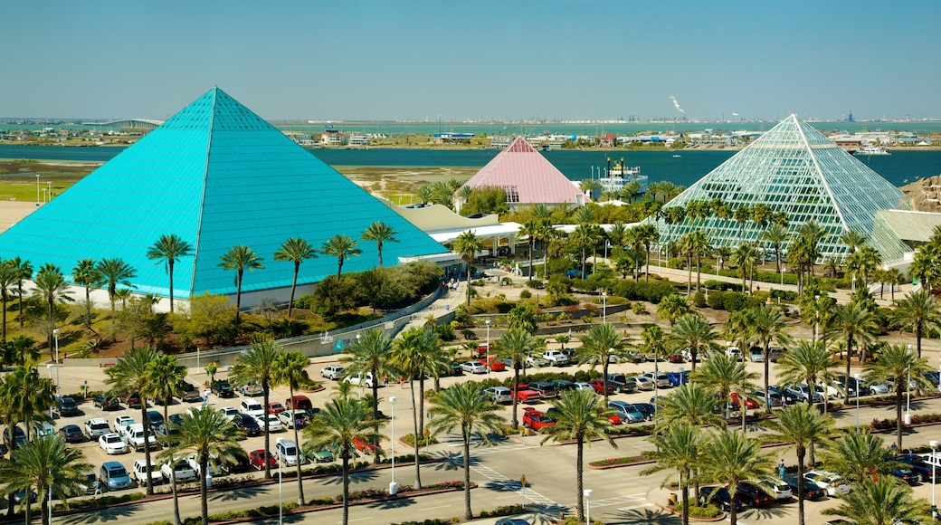 Moody Gardens which includes tropical scenes and modern architecture