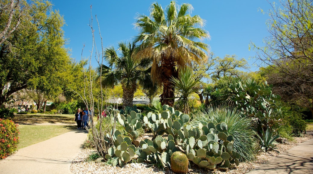 Alamo som inkluderer hage