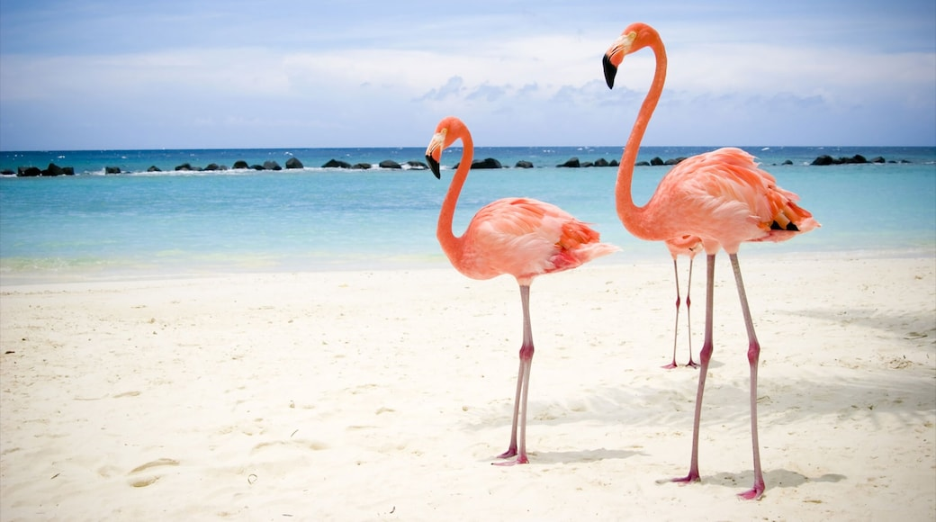 Xcaret Eco Theme Park featuring tropical scenes, bird life and a sandy beach