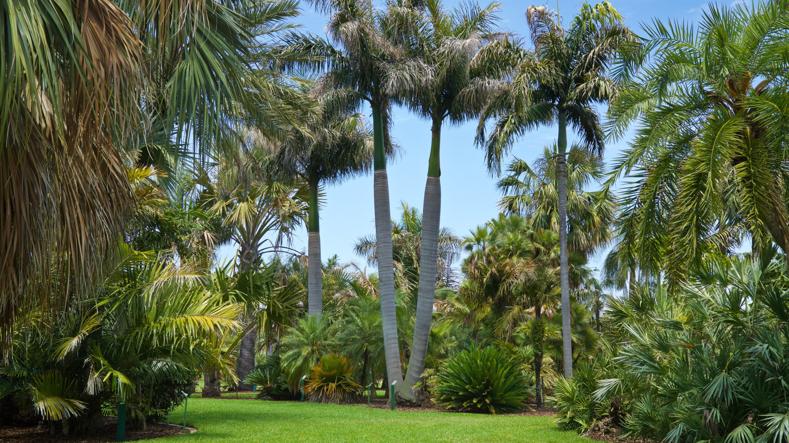 Gizella Kopsick Palm Arboretum, St. Petersburg, Florida, USA