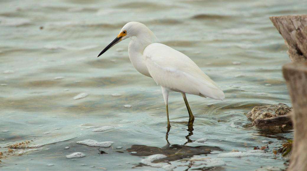 Florida Keys Wild Bird Rehabilitation Center