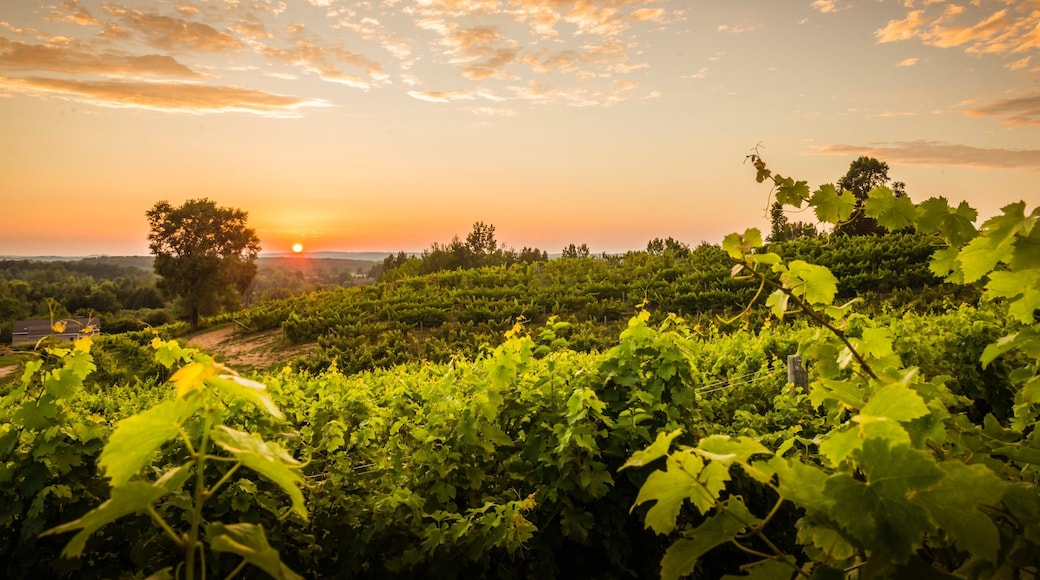 Traverse City showing landscape views, a sunset and farmland