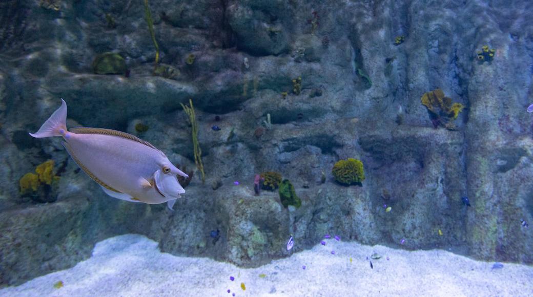 Roquetas de Mar Aquarium featuring marine life