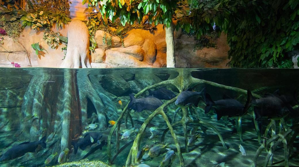 Roquetas de Mar Aquarium which includes marine life
