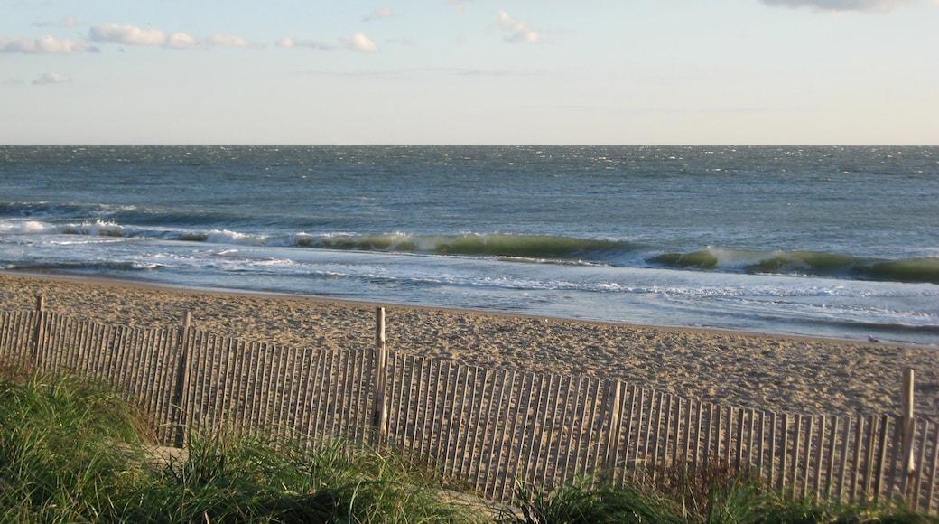 Rehoboth Beach showing a sandy beach