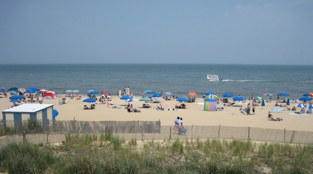 Rehoboth Beach which includes a sandy beach and tropical scenes