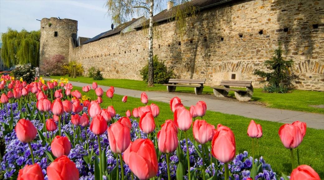Bad Neuenahr-Ahrweiler toont kasteel of paleis, een tuin en historische architectuur