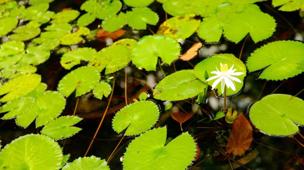 타오단 공원 을 특징 꽃