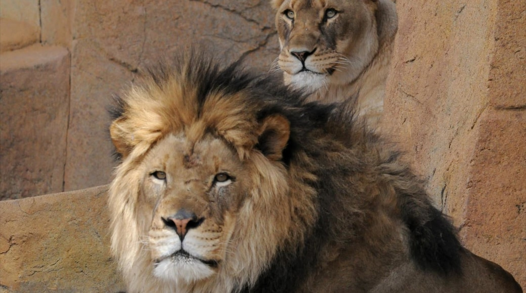 Brookfield Zoo showing dangerous animals and zoo animals