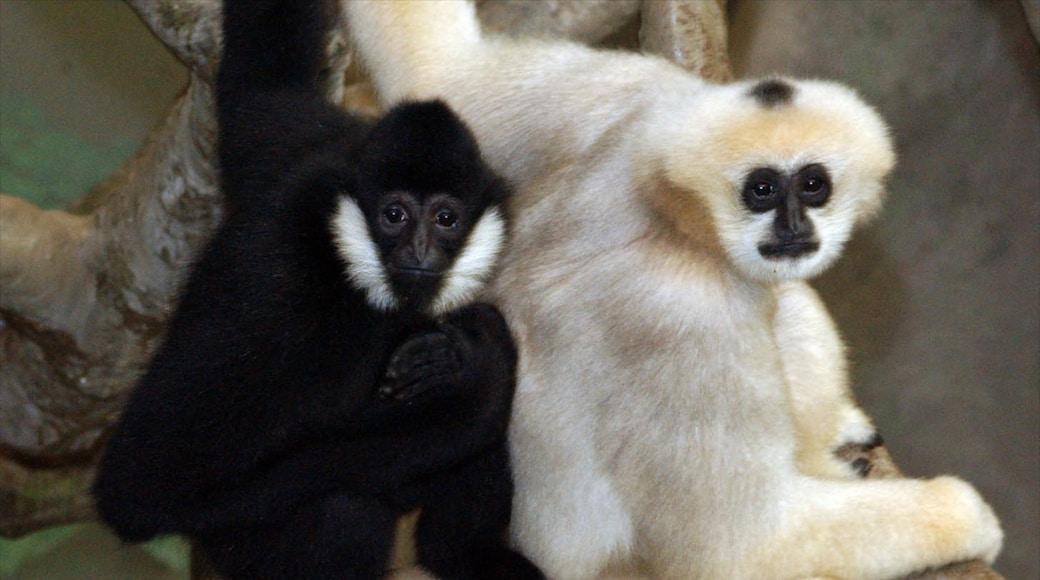 Brookfield Zoo showing zoo animals