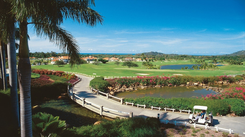 Clifton Beach featuring tropical scenes and a garden