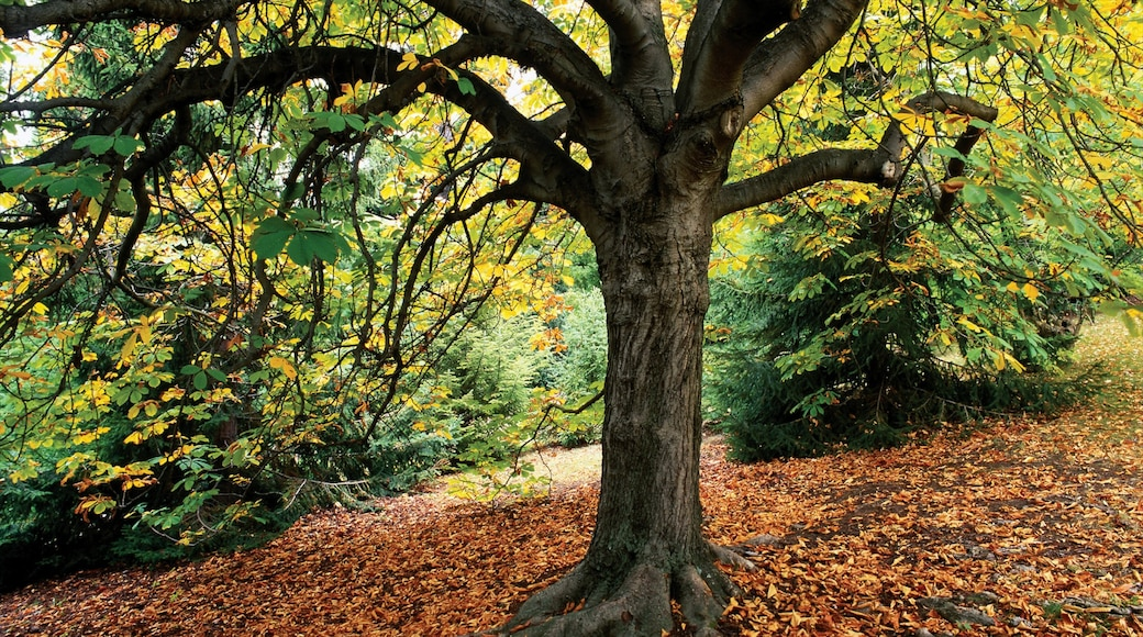 Royal Tasmanian Botanical Gardens which includes a park and autumn colours