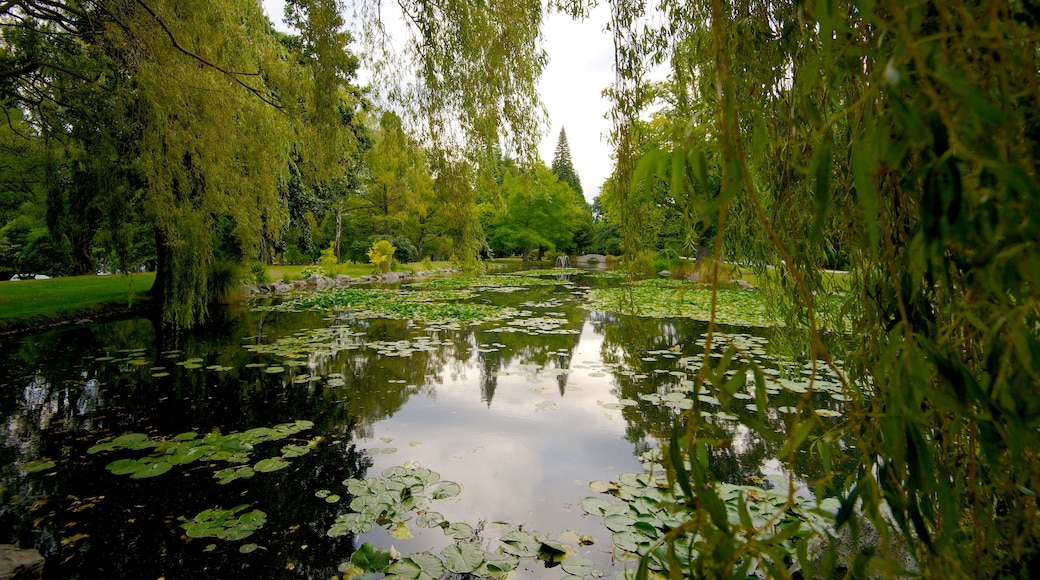 Queenstown Gardens showing a park, a pond and landscape views