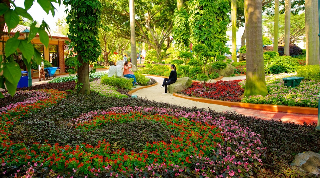 Chimelong Paradise which includes a park and flowers
