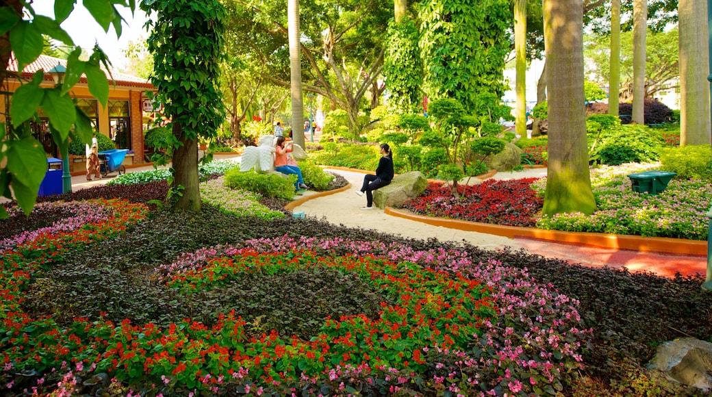 차임롱 파라다이스 을 보여주는 꽃 과 정원