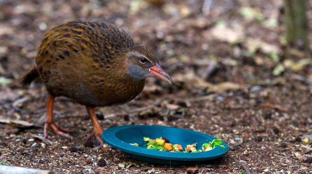 Kiwi and Birdlife Park featuring zoo animals and bird life