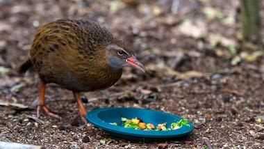 Kiwi and Birdlife Park