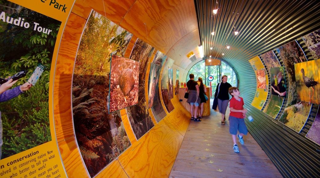 Kiwi and Birdlife Park showing rides and interior views