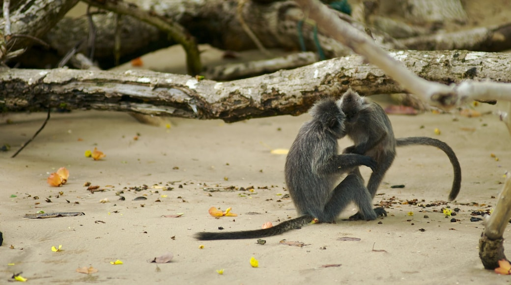 Bako National Park which includes zoo animals, a park and animals
