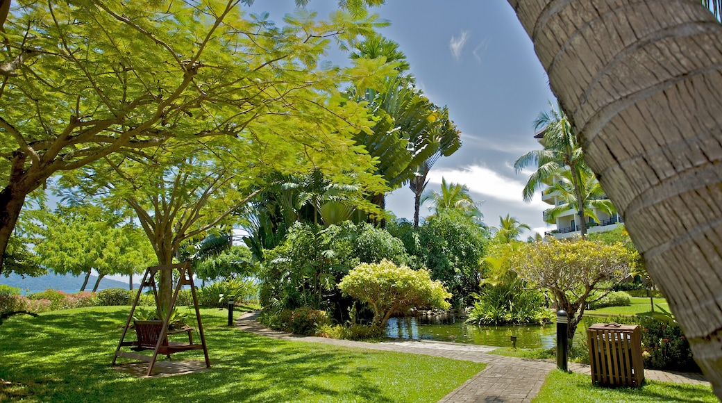 Kota Kinabalu featuring tropical scenes and a park