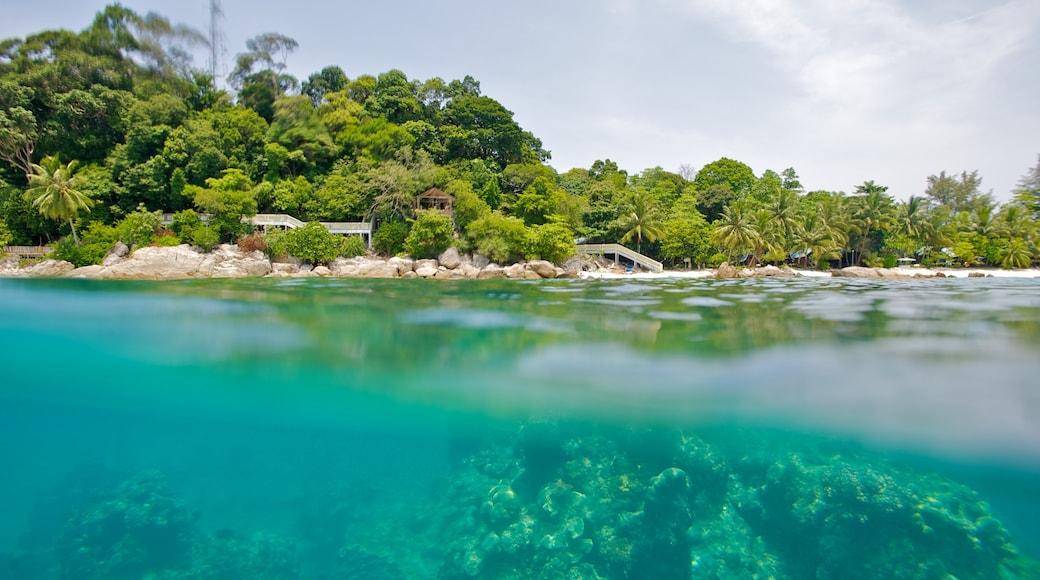 Pulau Perhentian Besar mettant en vedette corail, scènes tropicales et côte rocheuse