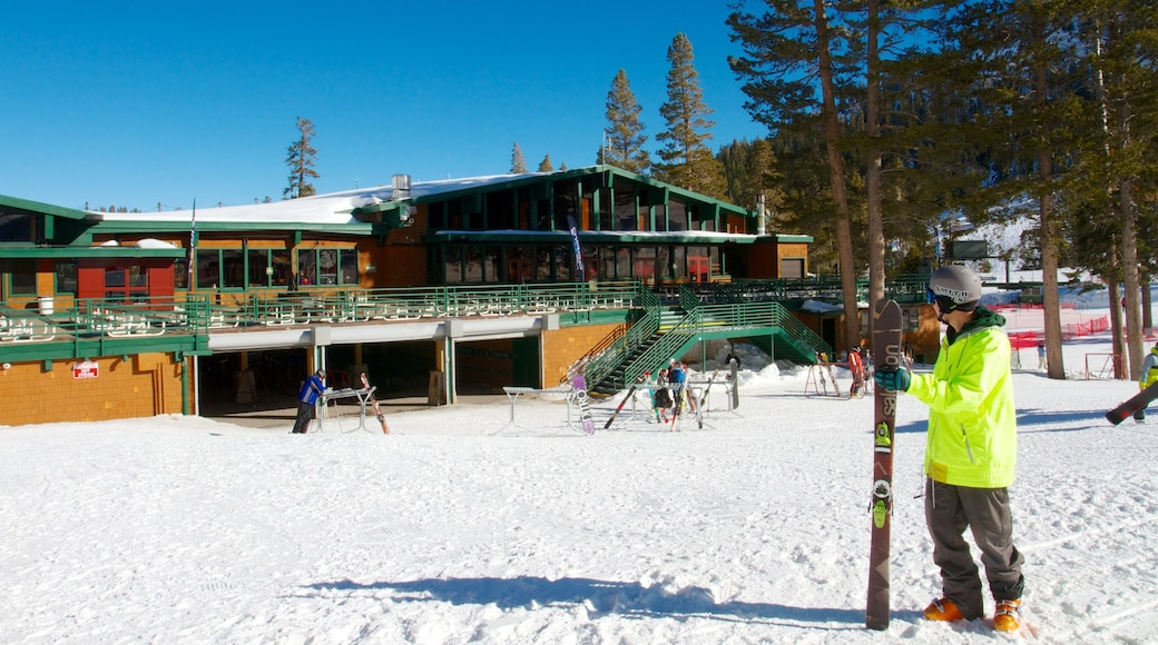 Alpine Meadows Ski Resort showing snow skiing, snow and a small town or village
