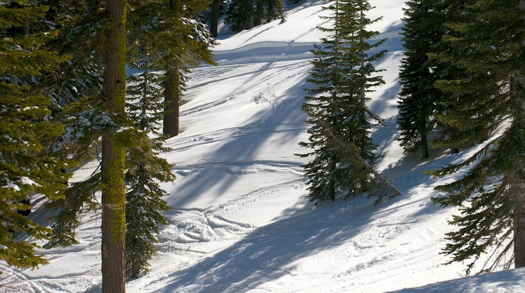Homewood Mountain Resort showing forests and snow