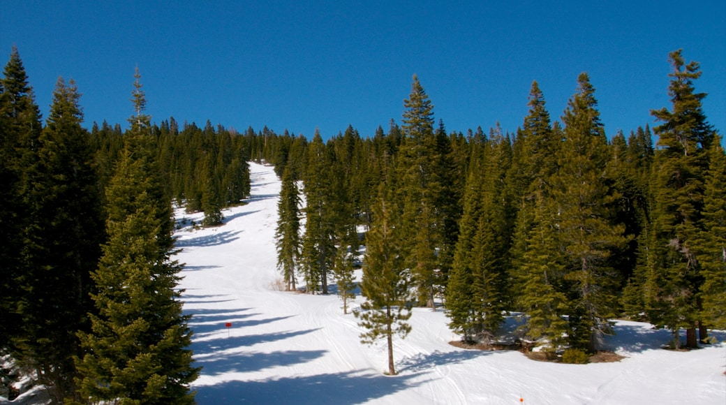 Homewood Mountain Resort featuring forests and snow