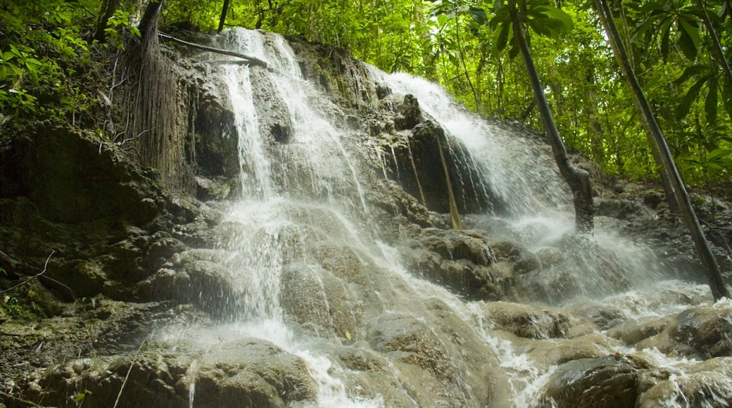 Somerset Falls showing forests, a park and landscape views