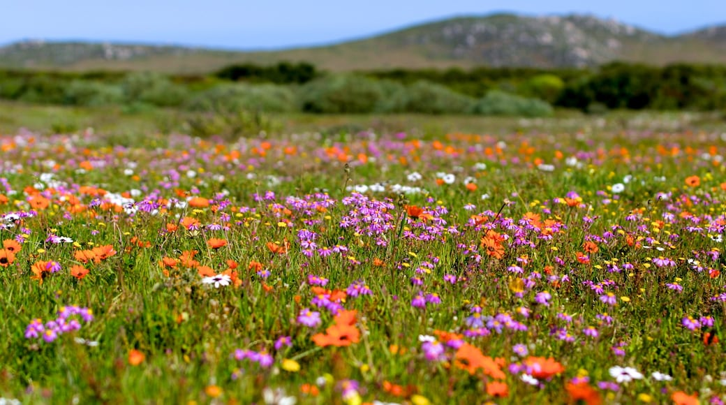 Cape of Good Hope featuring a garden, wildflowers and landscape views