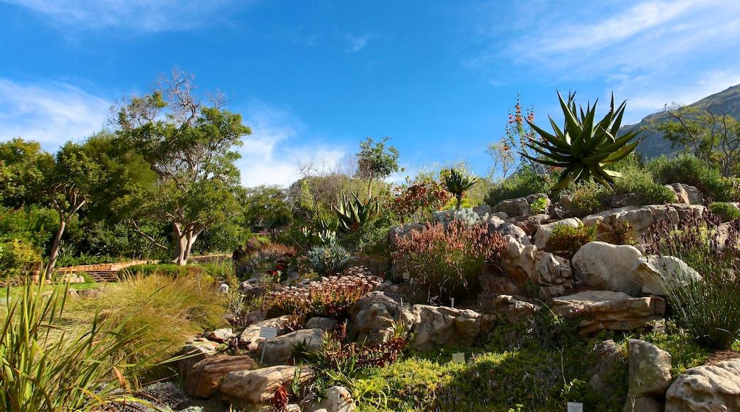 Kirstenbosch National Botanical Garden showing a park and landscape views