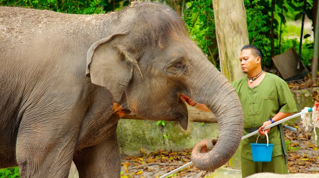 Singapore Zoo showing land animals and zoo animals as well as an individual male