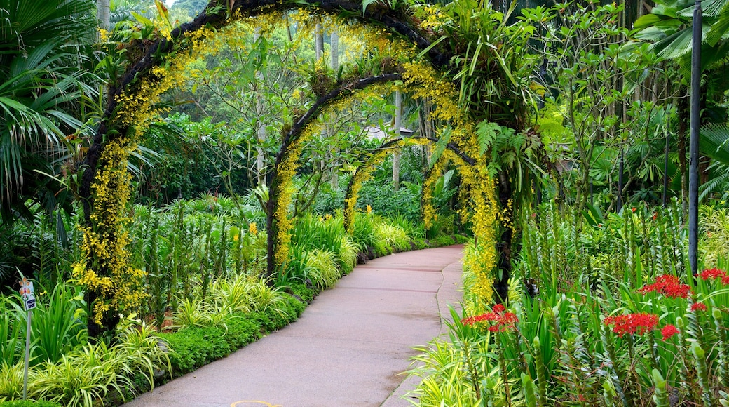 National Orchid Garden showing a garden