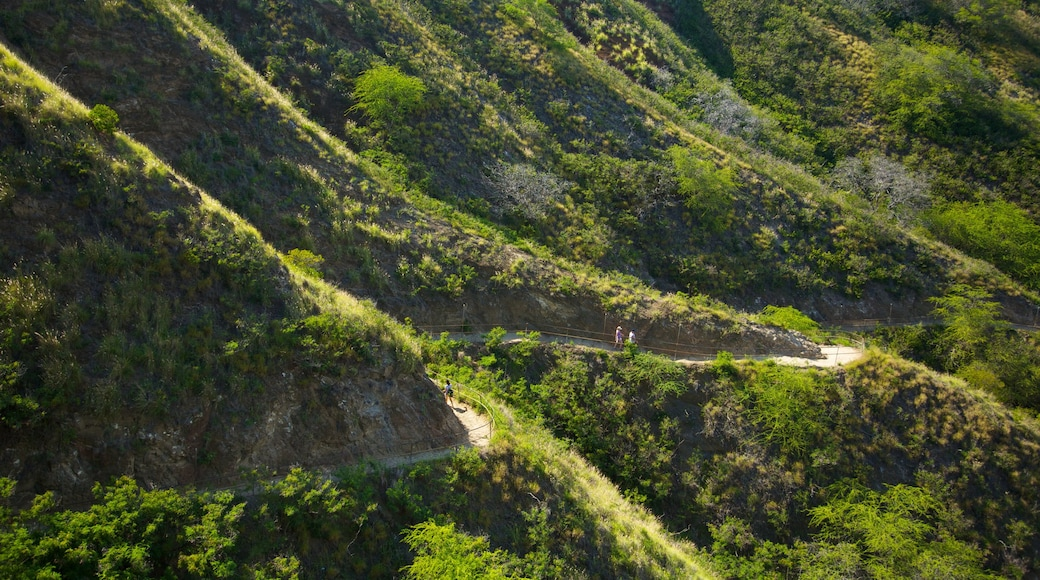 Diamond Head showing landscape views and forest scenes