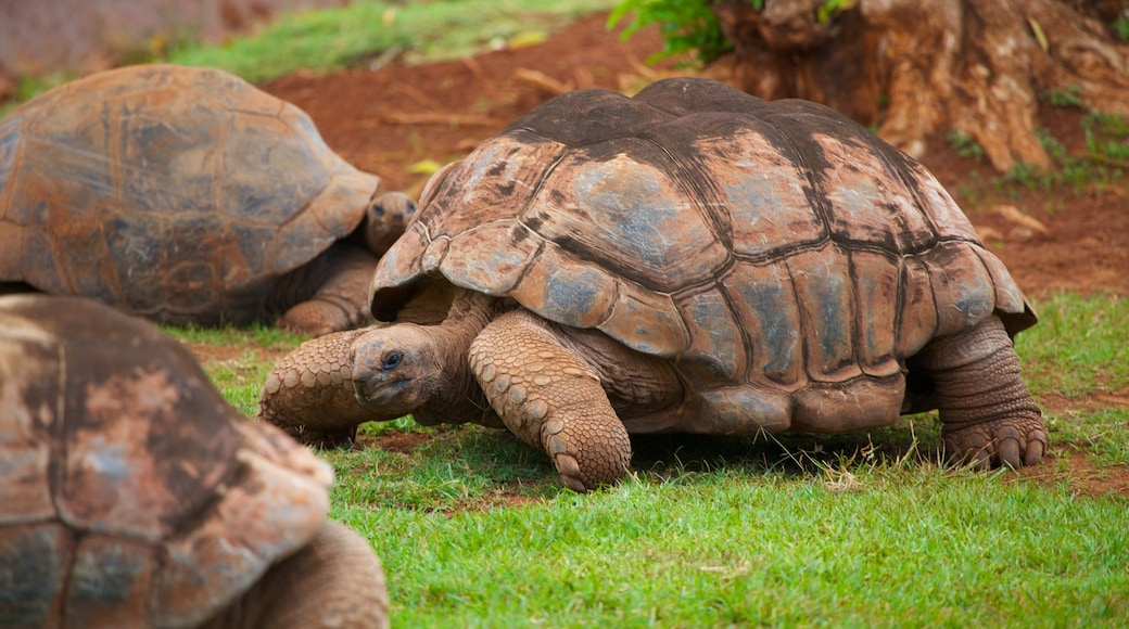 Honolulu Zoo featuring animals and zoo animals