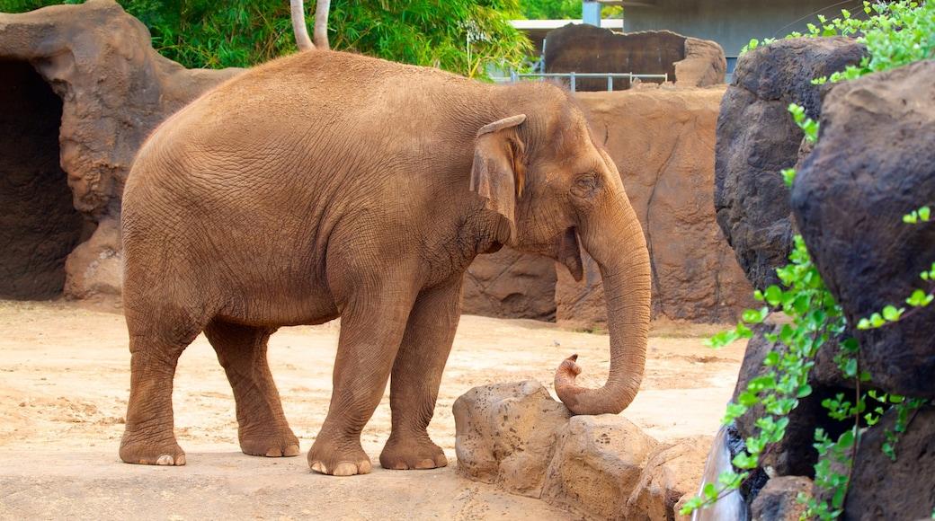 Honolulu Zoo showing land animals and zoo animals