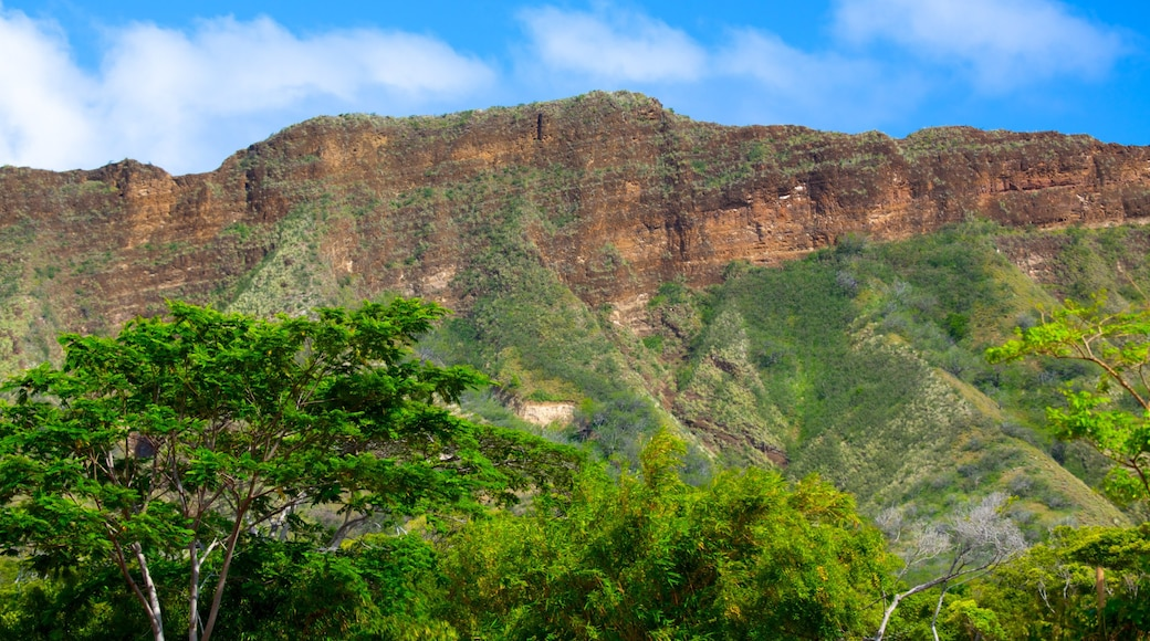 Honolulu Zoo which includes mountains and landscape views