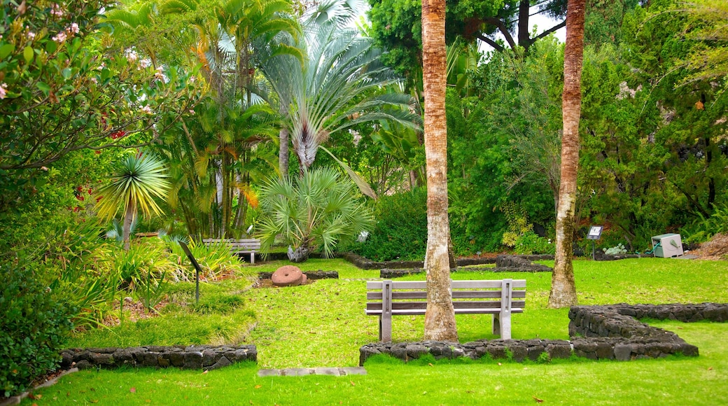 Sadie Seymour Botanical Garden featuring a park and tropical scenes