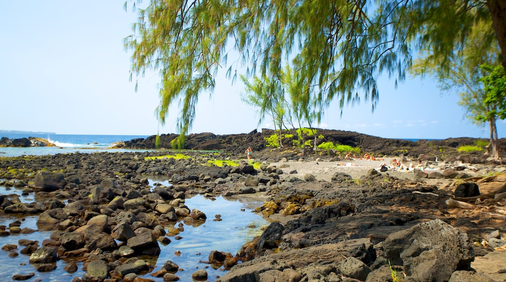 Richardson\'s Ocean Park which includes rugged coastline, landscape views and tropical scenes