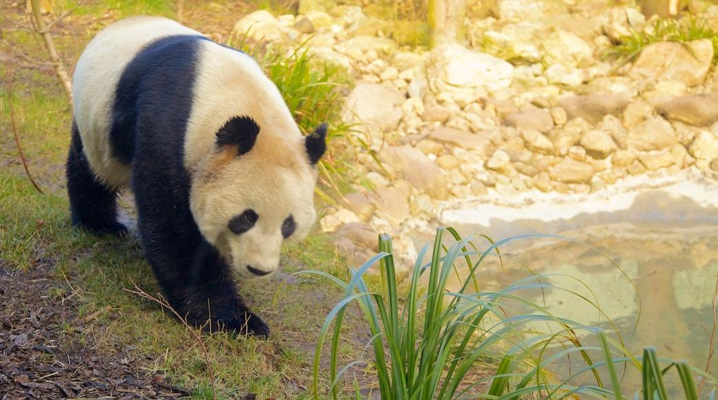 Edinburgh Zoo mettant en vedette animaux de zoo et animaux terrestres