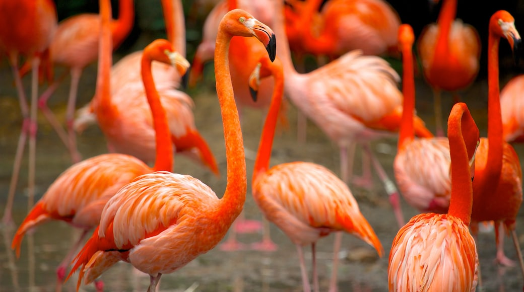 Jurong Bird Park showing bird life