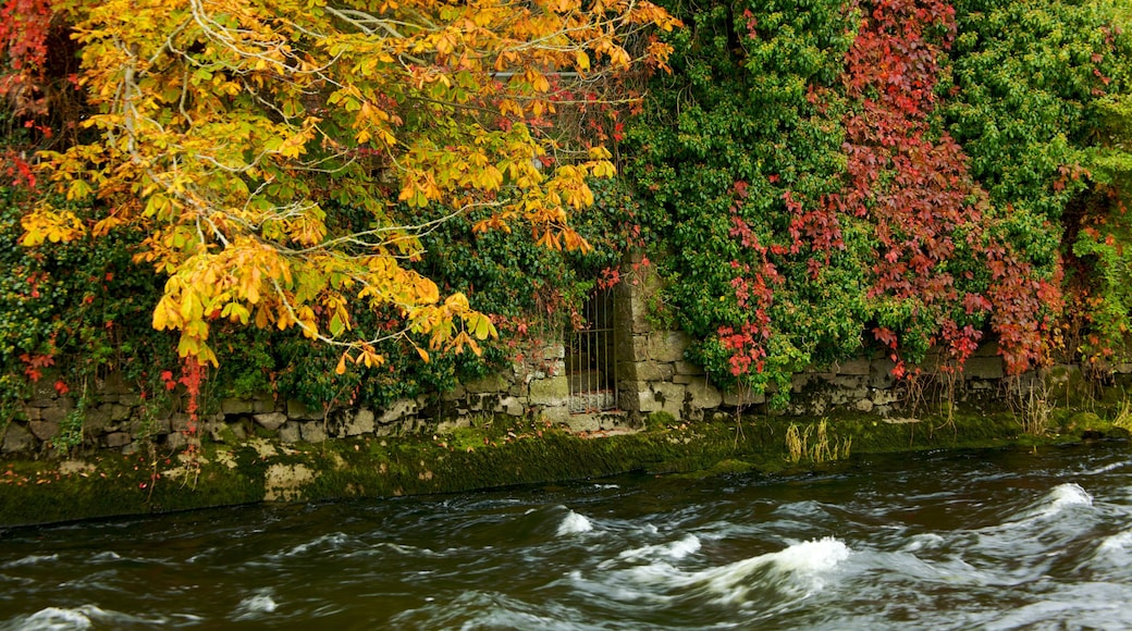 Galway which includes autumn leaves and a river or creek