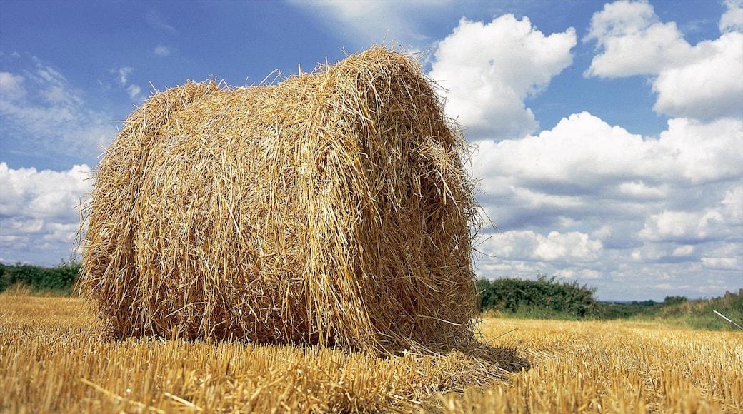 Kilkenny featuring farmland and landscape views