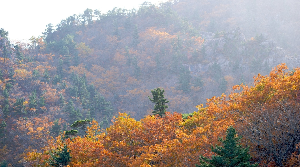 Seorak-san National Park which includes mist or fog, mountains and forests