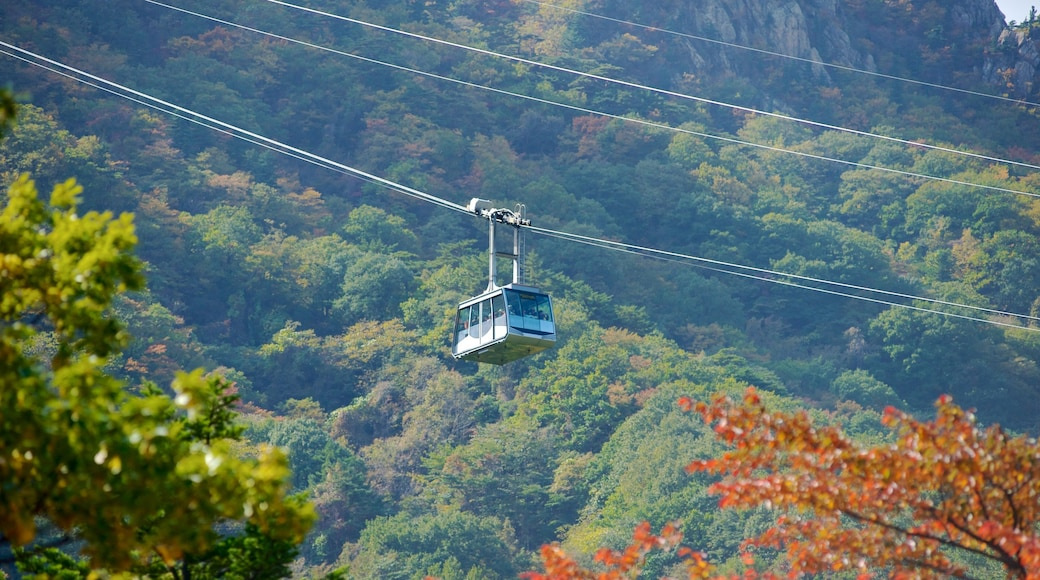 Seorak-san National Park which includes mountains, forest scenes and a gondola
